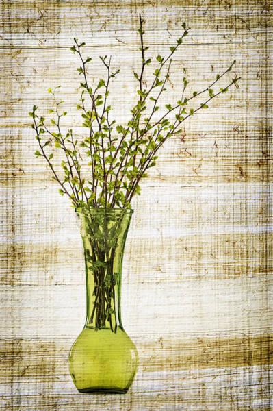 New Leaf Photograph - Spring Vase by Elena Elisseeva
