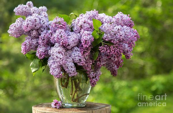 Photograph - Spring Vase by Karin Pinkham