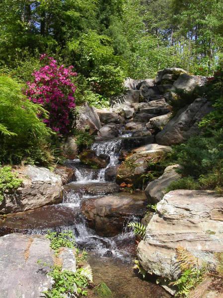 Photograph - Spring Waterfall by Anne Cameron Cutri