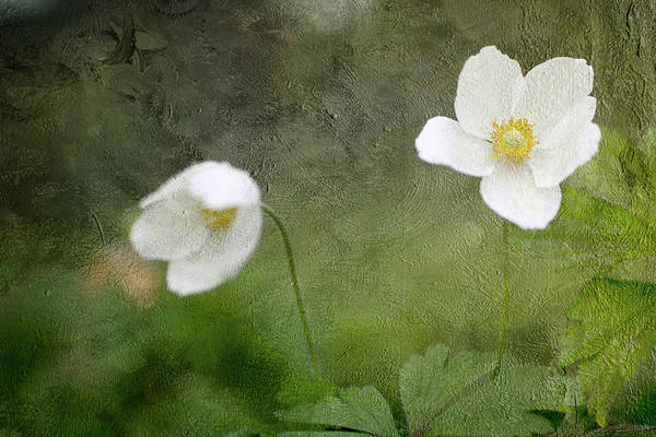 Wall Art - Photograph - Spring White by Rebecca Cozart