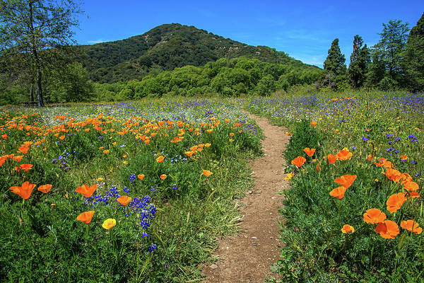 Photograph - Spring Wildflower Pathway by Lynn Bauer