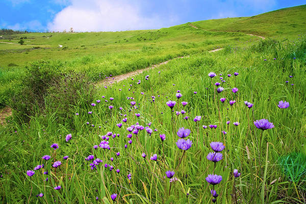 Photograph - Spring Wildflower Trail 2 by Lynn Bauer