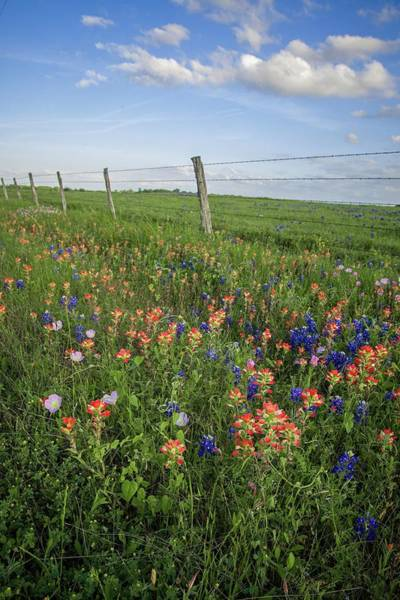 Photograph - Spring Wildflowers Along The Fenceline by Lynn Bauer