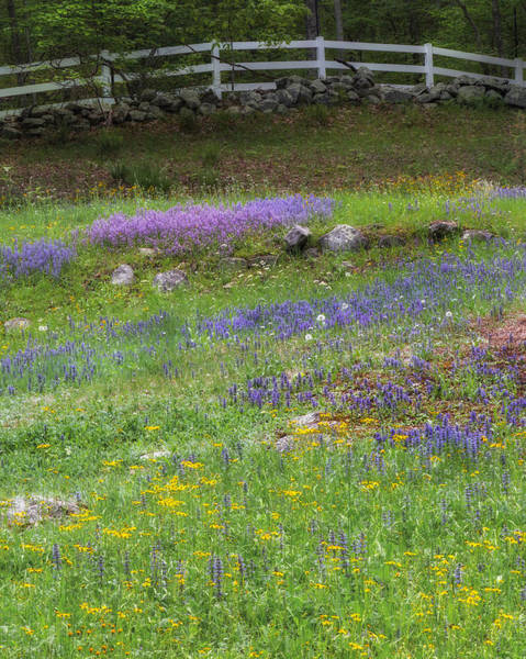 Photograph - Spring Wildflowers by Bill Wakeley