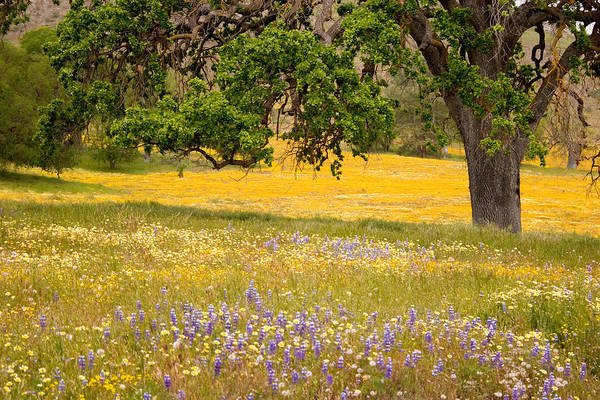 Wall Art - Photograph - Spring Wildflowers by Carol Leigh