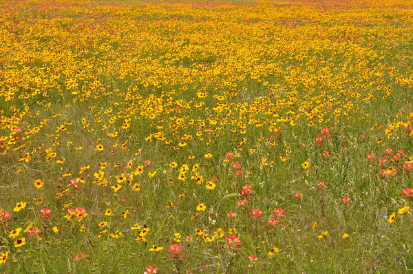 Photograph - Spring Wildflowers by Frank Madia