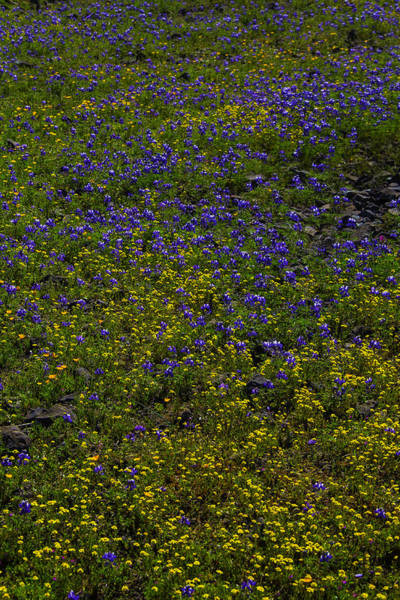 Wall Art - Photograph - Spring Wildflowers by Garry Gay