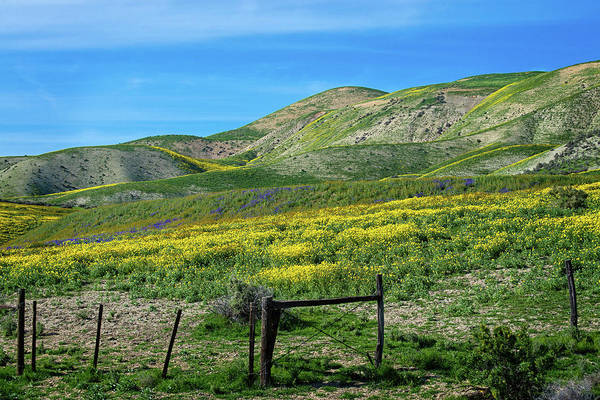 Photograph - Spring Wildflowers On The Carrizo Plain Superbloom 2017 by Lynn Bauer