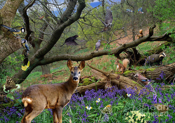 Photograph - Spring Woodland Animals by Warren Photographic