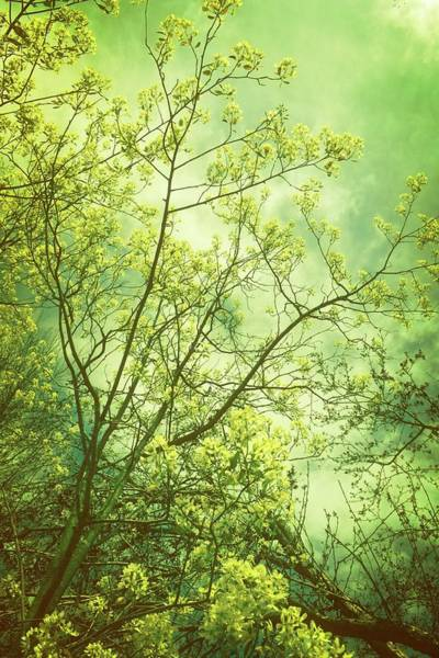 Photograph - Spring - Yellow by Michelle Calkins