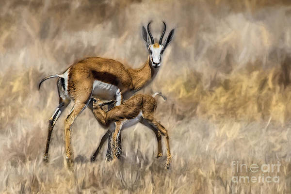Photograph - Springbok Mom And Calf by Kay Brewer