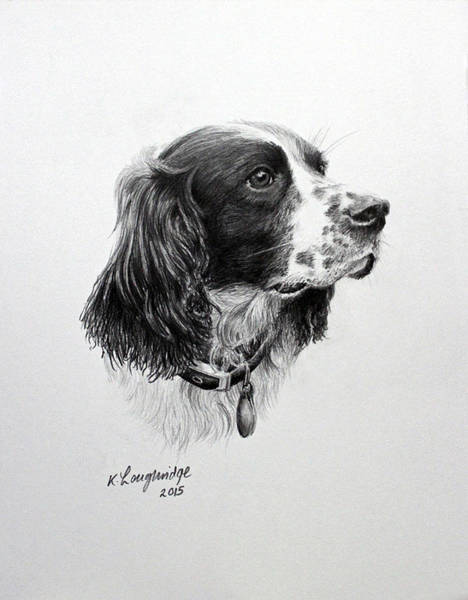 Pet Portrait Drawing - Springer by Karen Loughridge