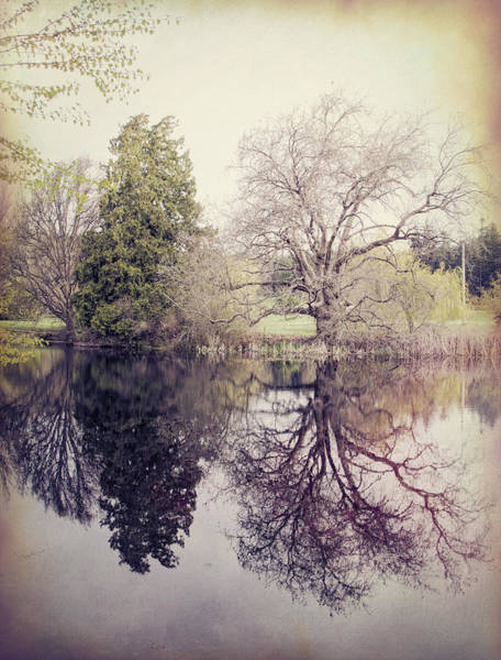 Photograph - Two Trees Reflected - Textured by Marilyn Wilson
