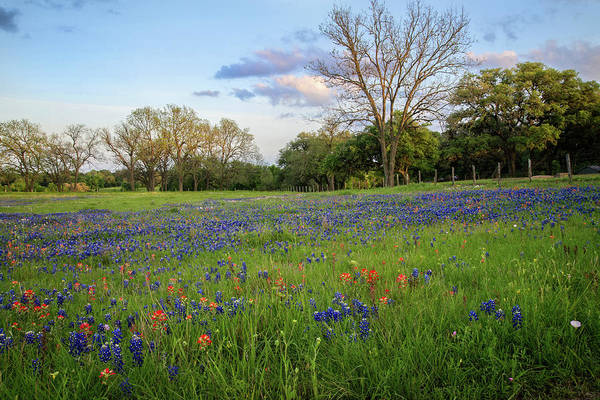Photograph - Spring's Glory In The Hill Country by Lynn Bauer
