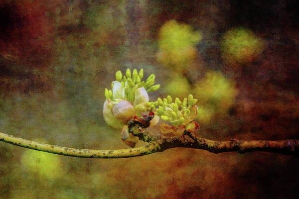 Photograph - Springs Impression 9365 Idp_2 by Steven Ward