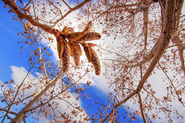Wall Art - Photograph - Spring's Opening Up In The Cottonwood by Mike Herron