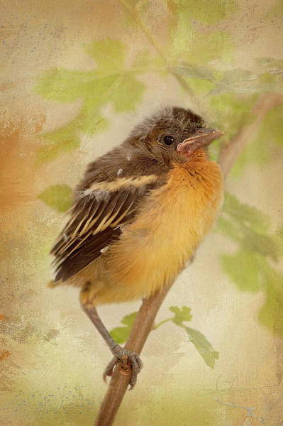 Photograph - Spring's Sweet Song by Jill Love