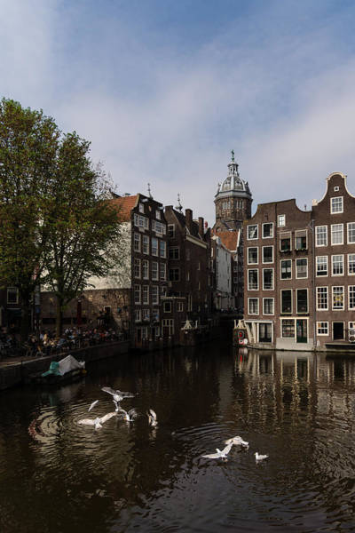 Photograph - Springtime Amsterdam - Noisy Seagull Commotion On The Canal by Georgia Mizuleva