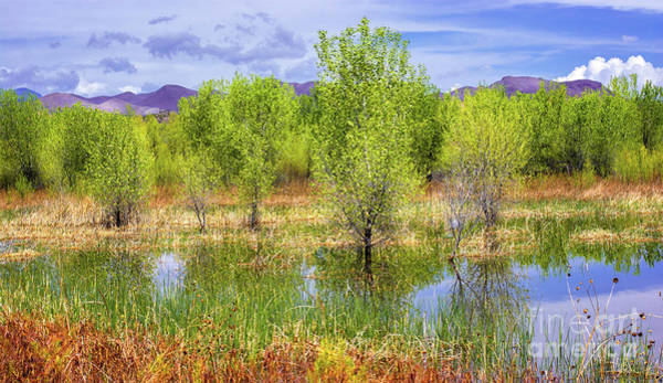 Photograph - Springtime At Bosque Del Apache by Susan Warren