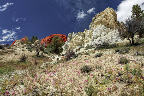 Photograph - Springtime At Red Rock Canyon by James Eddy