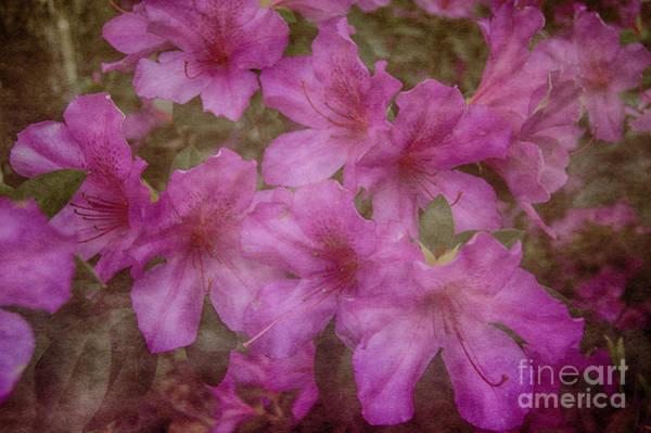 Photograph - Springtime Beauty by Judy Hall-Folde