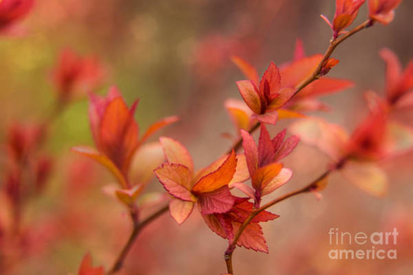 Photograph - Springtime Colors by Karin Pinkham