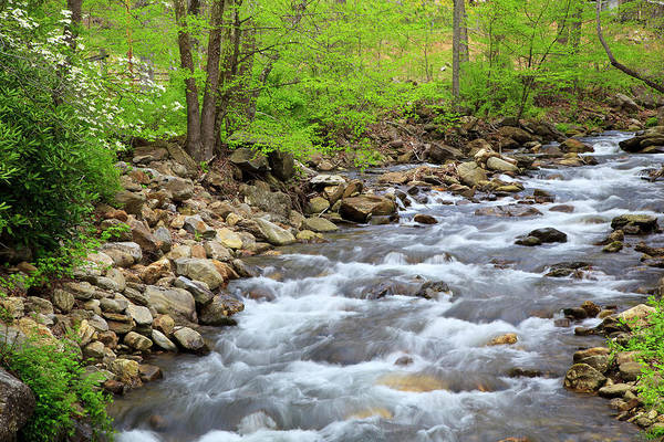 Photograph - Springtime Creek by Jill Lang
