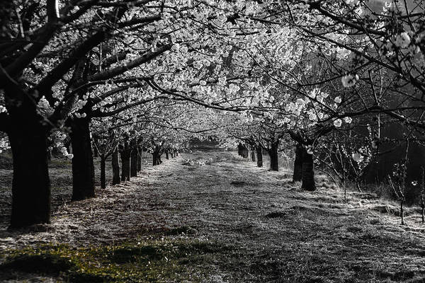 Photograph - Springtime by Edgar Laureano
