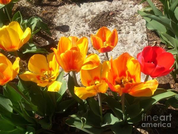 Photograph - Springtime Flowers by Rachel Maynard