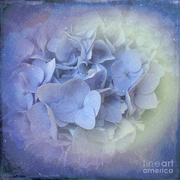 Photograph - Springtime Hydrangea by Luther Fine Art