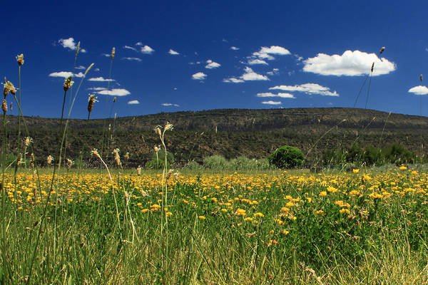 Photograph - Springtime In Hat Creek by James Eddy