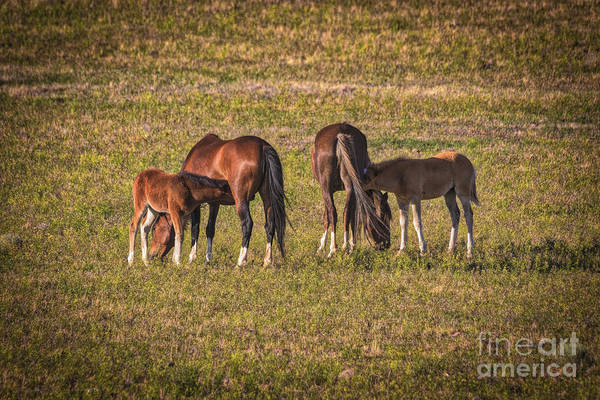 Mare And Foal Photograph - Springtime In Nevada by Mitch Shindelbower