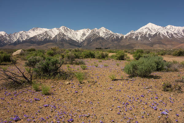 Photograph - Springtime In The Eastern Sierra by Loree Johnson