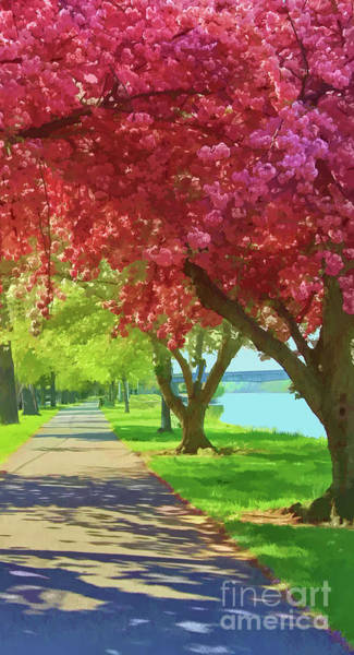 Photograph - Springtime In The Park by Geoff Crego
