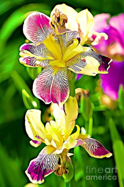 Photograph - Springtime Iris Flowers by Tatiana Travelways