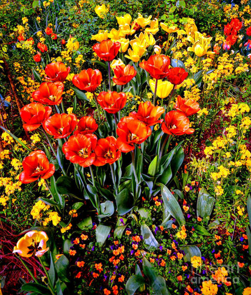 Wall Art - Photograph - Springtime by Olivier Le Queinec