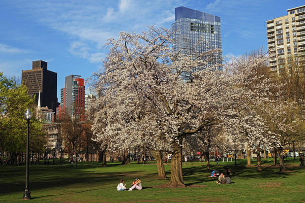 Photograph - Springtime On Boston Common Boston Ma Millennium Tower by Toby McGuire