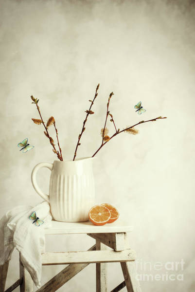 Wall Art - Photograph - Springtime Still Life by Amanda Elwell