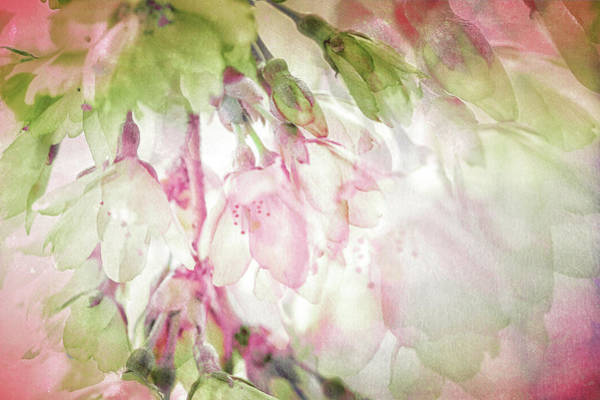 Wall Art - Photograph - Springtime, The Full Essence by Connie Handscomb