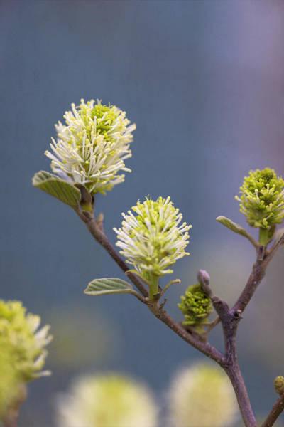 Photograph - Springtime by Tom Singleton