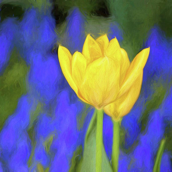 Bright Colorful Mixed Media - Springtime Yellow Tulips Painterly  by Carol Leigh