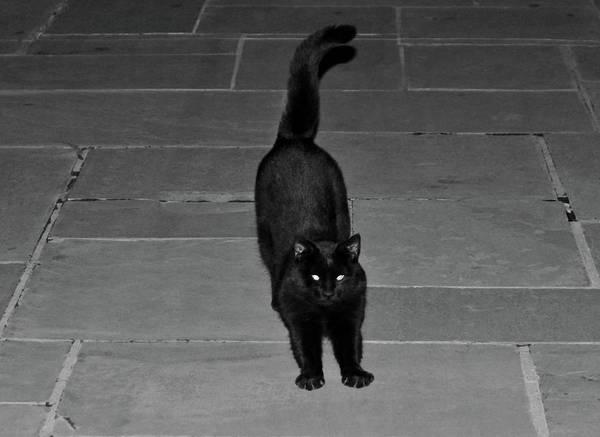 Photograph - Spunky Black Cat by Cynthia Guinn