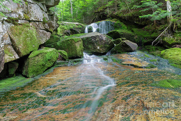 Photograph - Spur Brook - Randolph New Hampshire by Erin Paul Donovan
