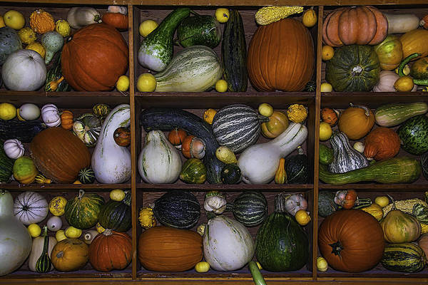 Compartments Photograph - Squash And Gourds In Compartments by Garry Gay