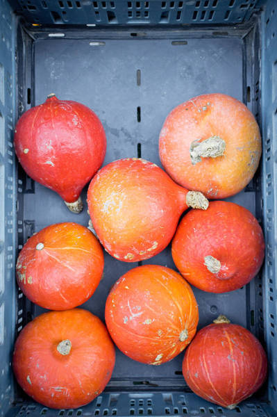 Wall Art - Photograph - Squashes by Tom Gowanlock