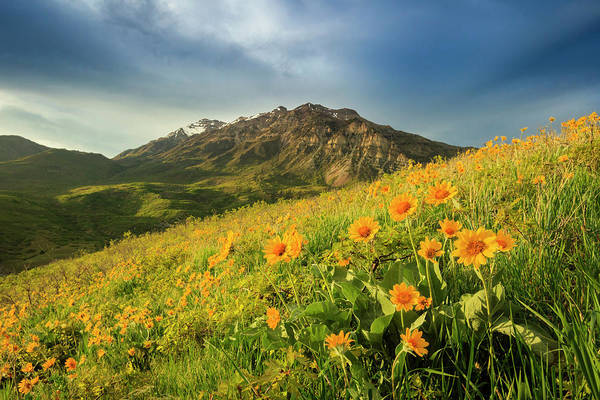 Wall Art - Photograph - Squaw Peak Wildflowers by Johnny Adolphson