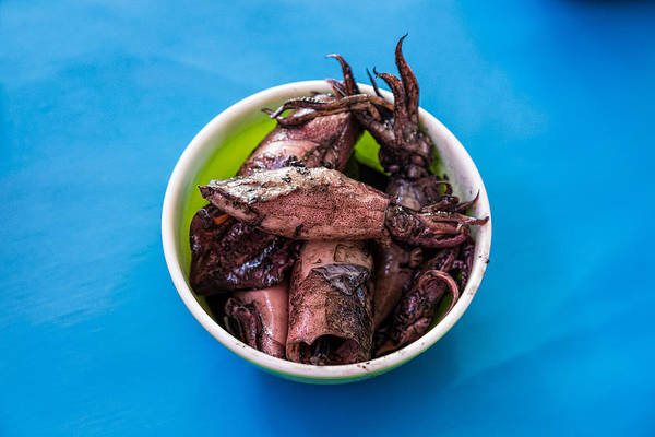 Photograph - Squid Bowl On Blue by James BO Insogna