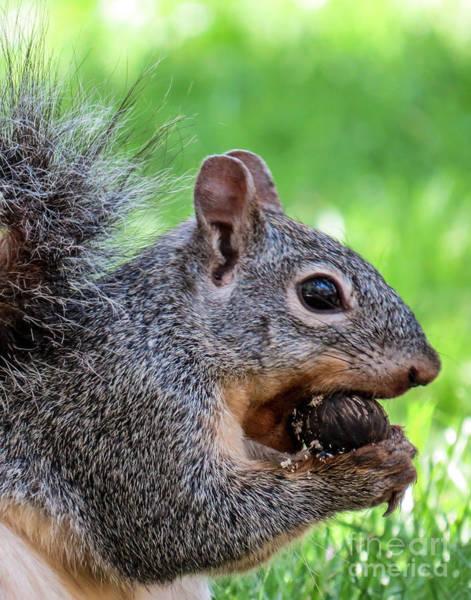 Squirrel 1 Art Print