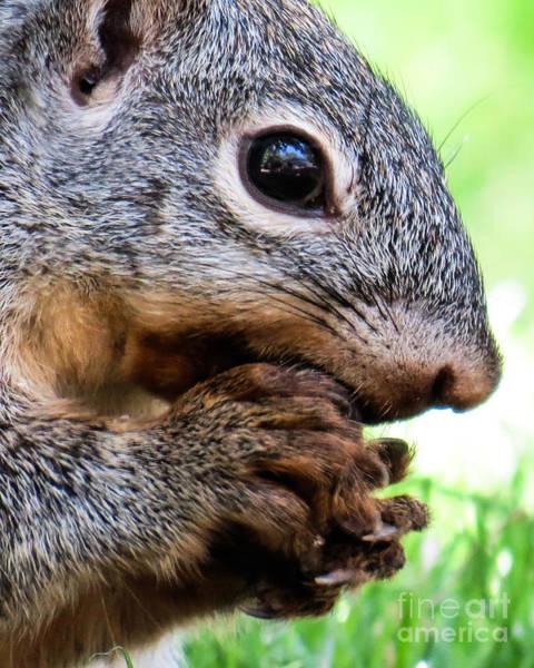 Squirrel 3 Art Print