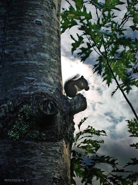 Wall Art - Photograph - Squirrel Breakfast by Garth Glazier